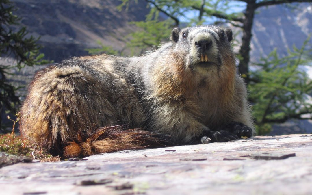 Blog 15 – Groundhog Day in EU Advocacy meetings: why we have it and how to escape